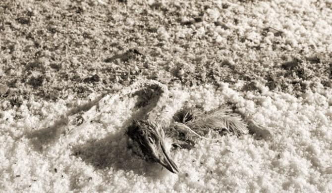 Kuşlar Ölünce